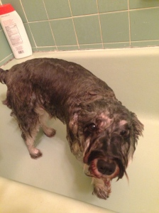 Baths also reveal the dog under the hair.
